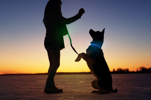 Bright LED collar for dogs - The Good Dog