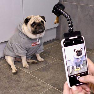 Doggy Selfie